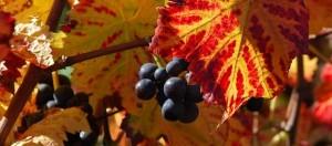 <H2>pinot noir</H2> - <H2>bourgogne</H2>