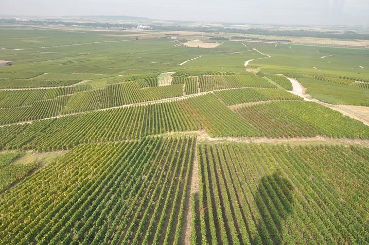 Vignoble de la montagne de Reims, depuis le phare de Verzenay