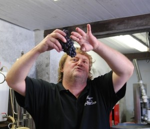 Emmanuel Pithois, vigneron champenois à Verzenay, montrant une grappe de pinot noir