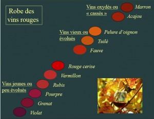 Couleurs vins rouges