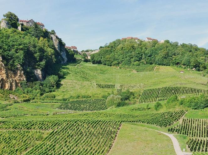 Vignoble de Château-Chalon, dans le Jura