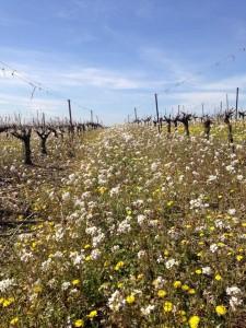 Agriculture biologique - Clos des Calades